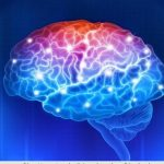 brain only